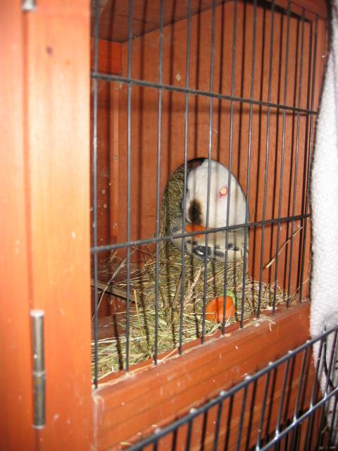 Pics Feb 2010 011