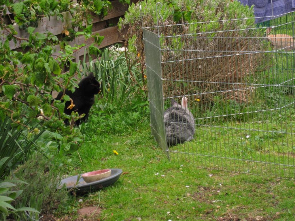 Cat Fight The Bunnington Post