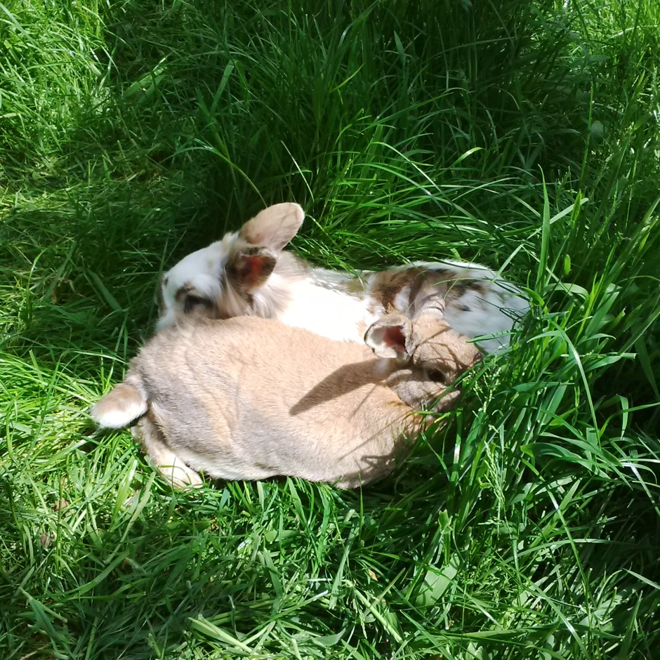 Haas and Katrijn lounging in the grass