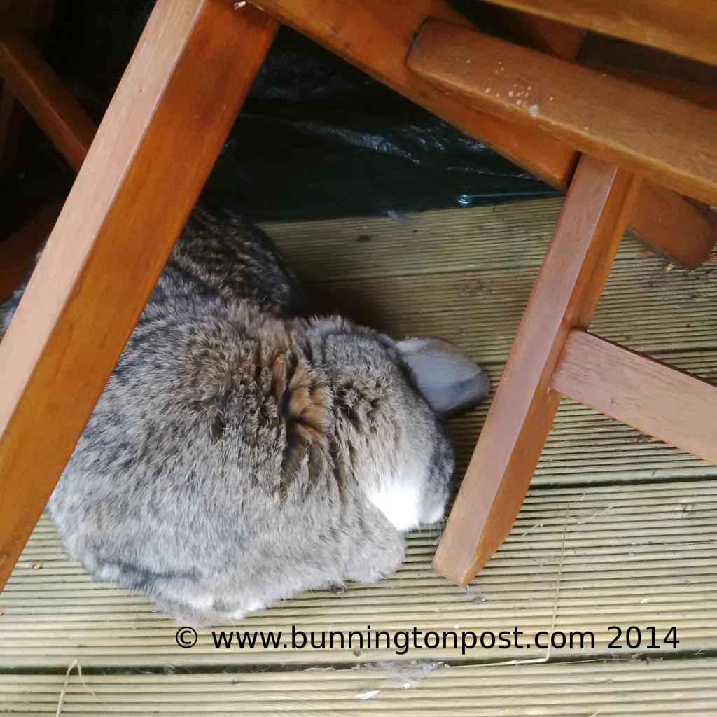 Bouffe under the table