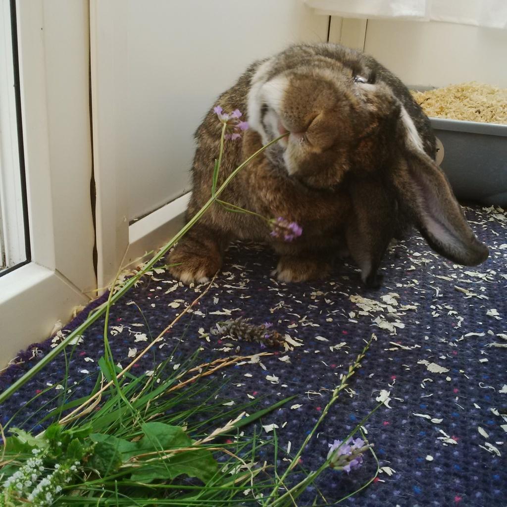 In September I ate the lavender harvest. I left nothing for Putin.