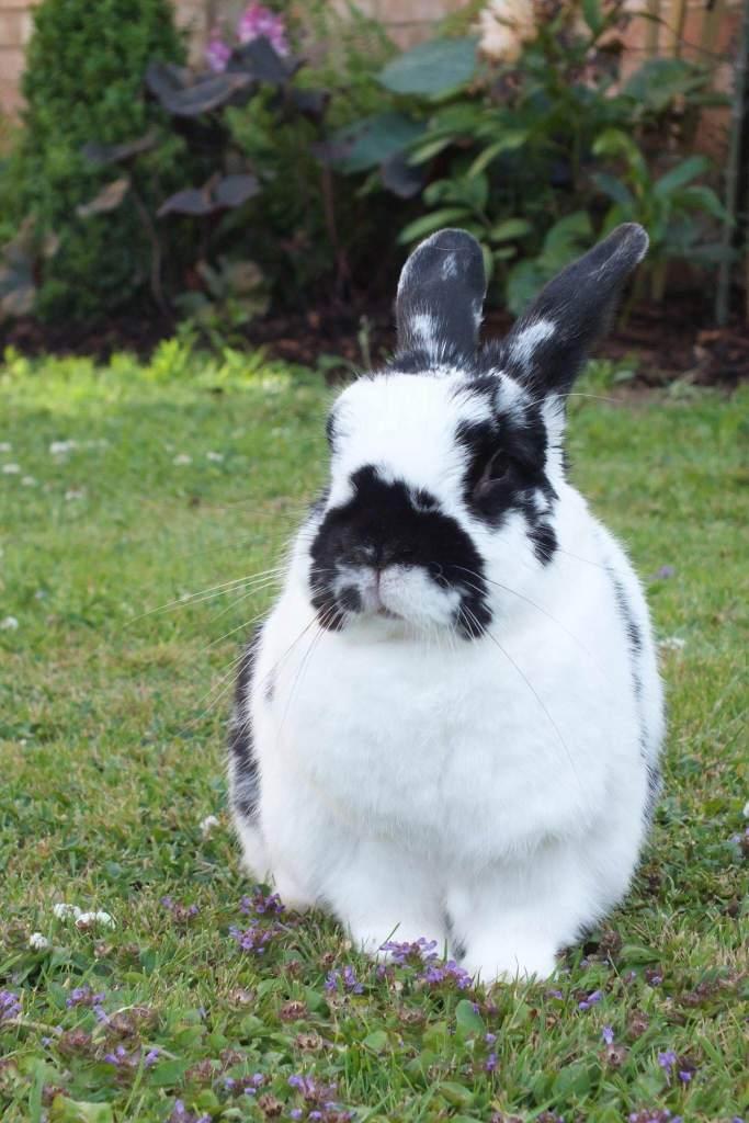 Flopsy the rabbit