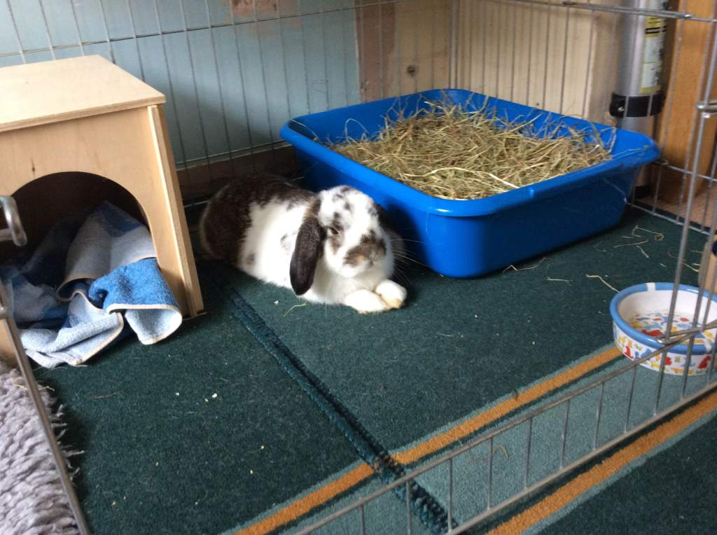 Miller the lop