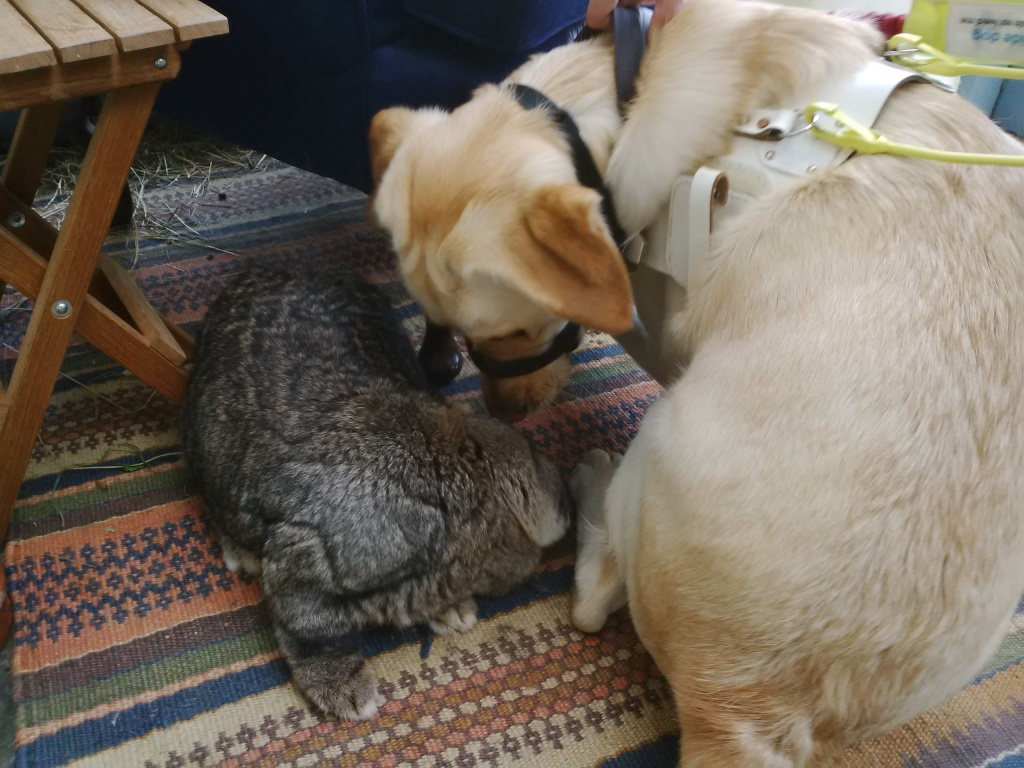Fletch and Bouffe nose-to-nose