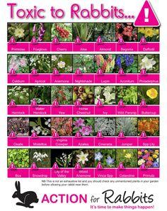 poisonous plants for rabbits