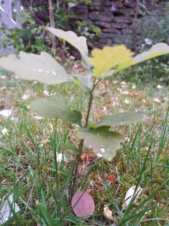 Magic Money Tree yielding a penny