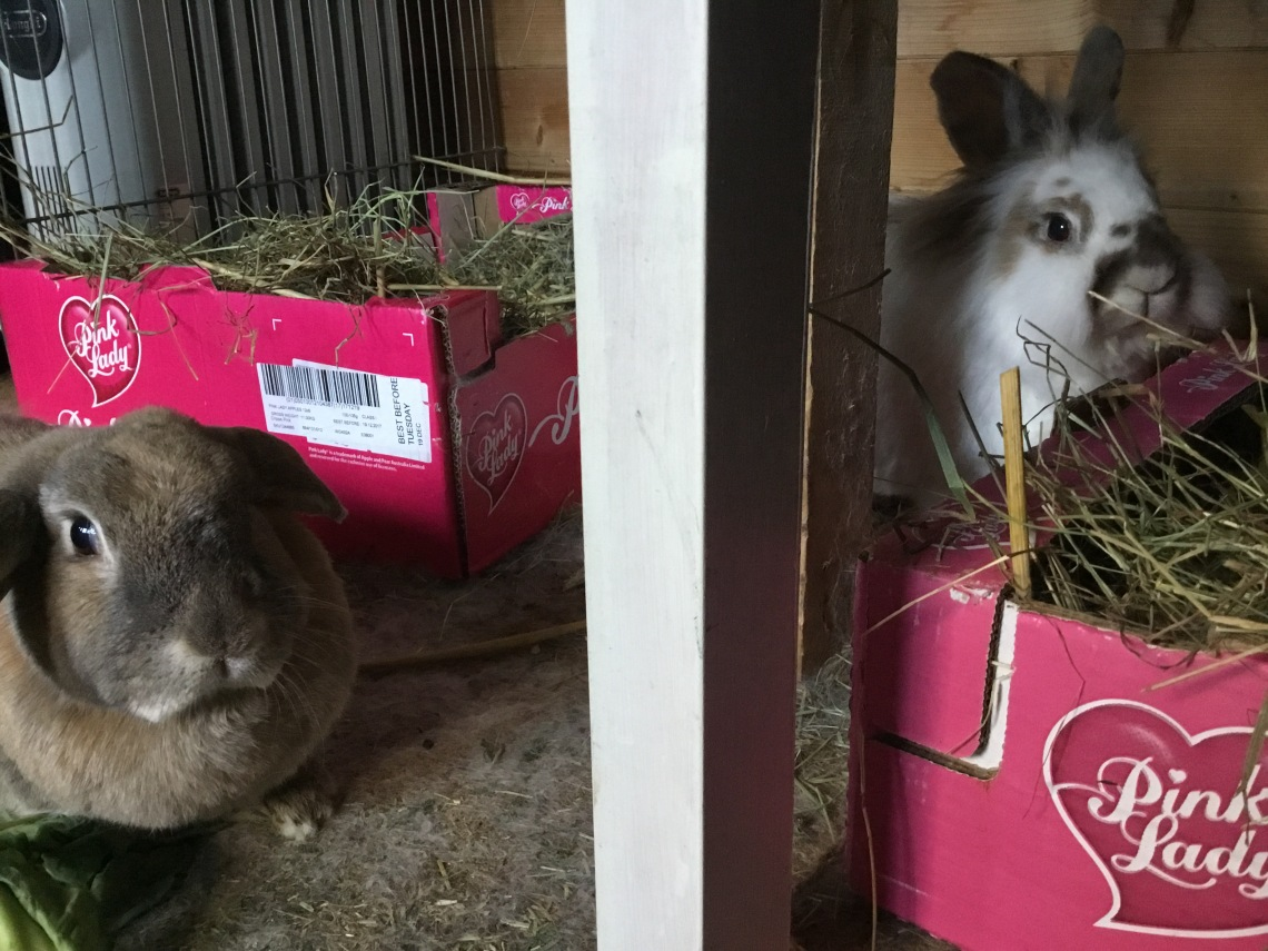 Katrijn and Haas side besides their hay boxes looking