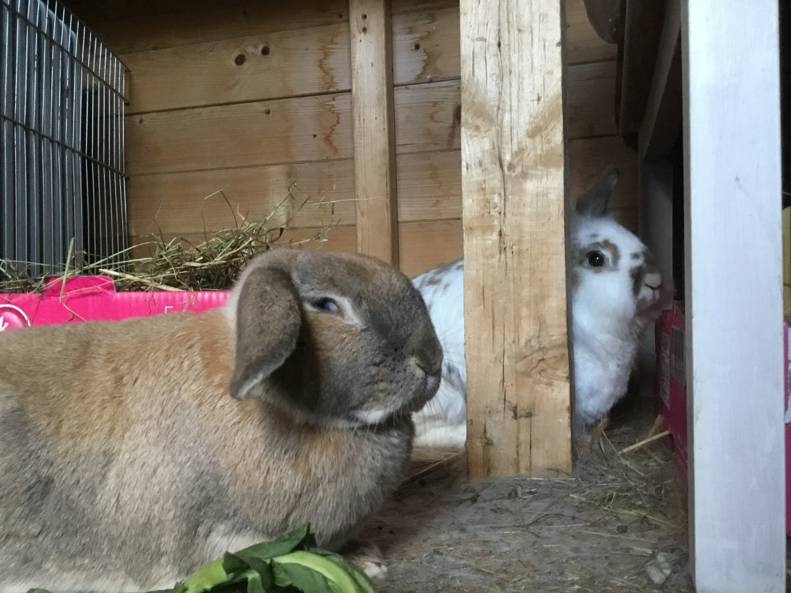 Haas the rabbit sits in the foreground and squints while Katrijn peers at the camera from behind a wooden table leg