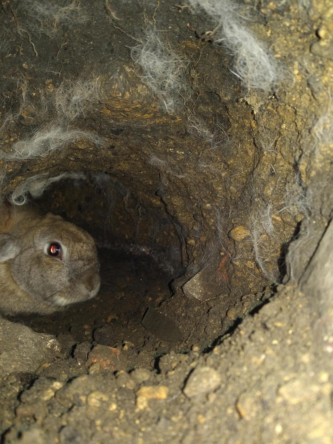 Haas Tunnel