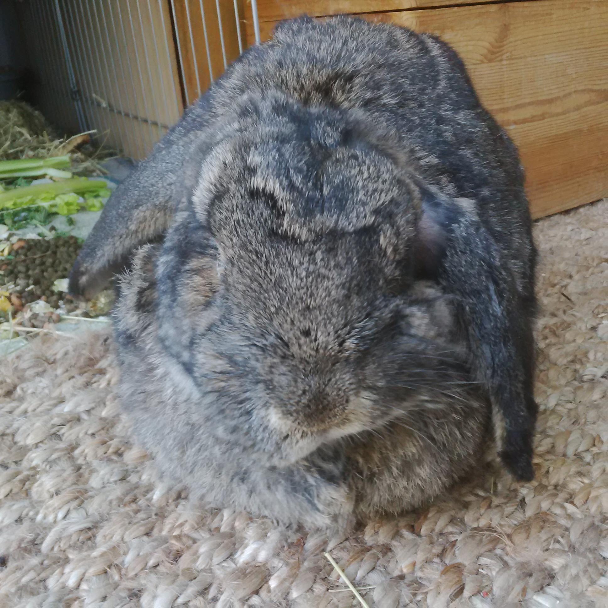 how to care for a rabbit with head tilt u2013 the bunnington post