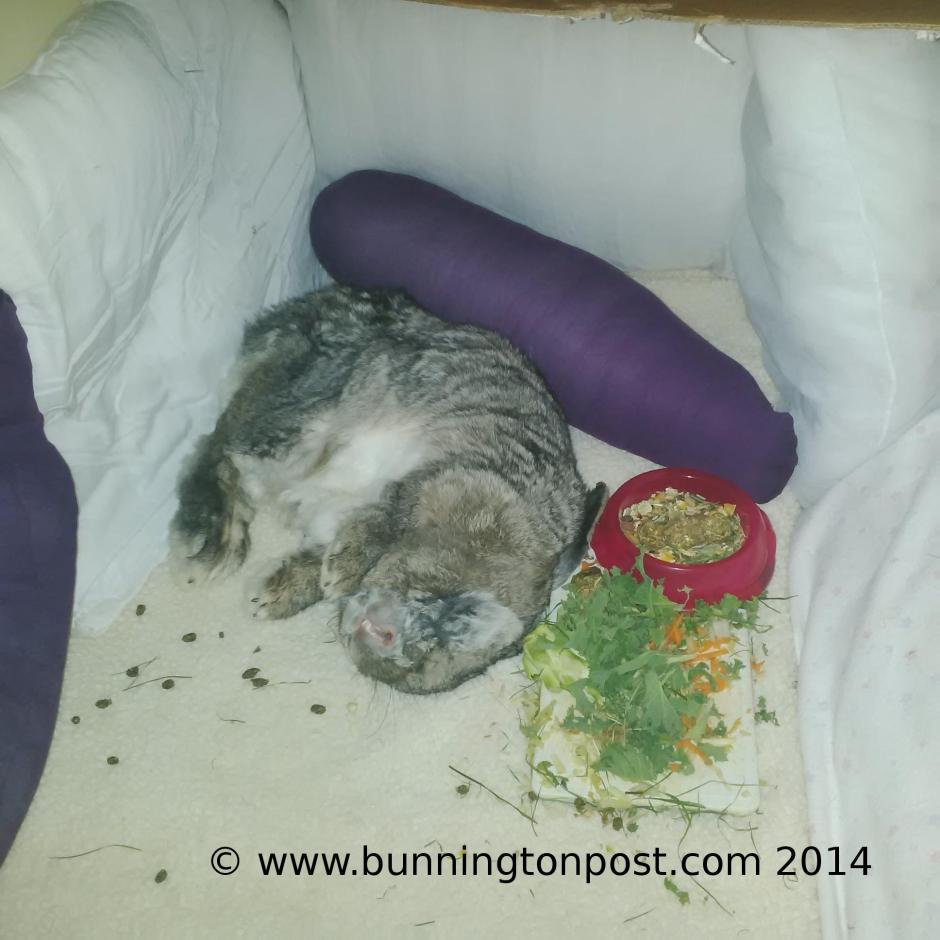 BouffeTiltSleeping
